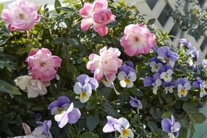 12月の庭03