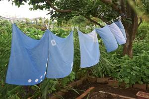 藍の生葉染め0